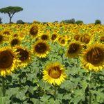 Memories of Cortona